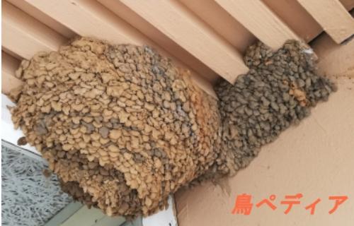 ツバメ 巣 対策