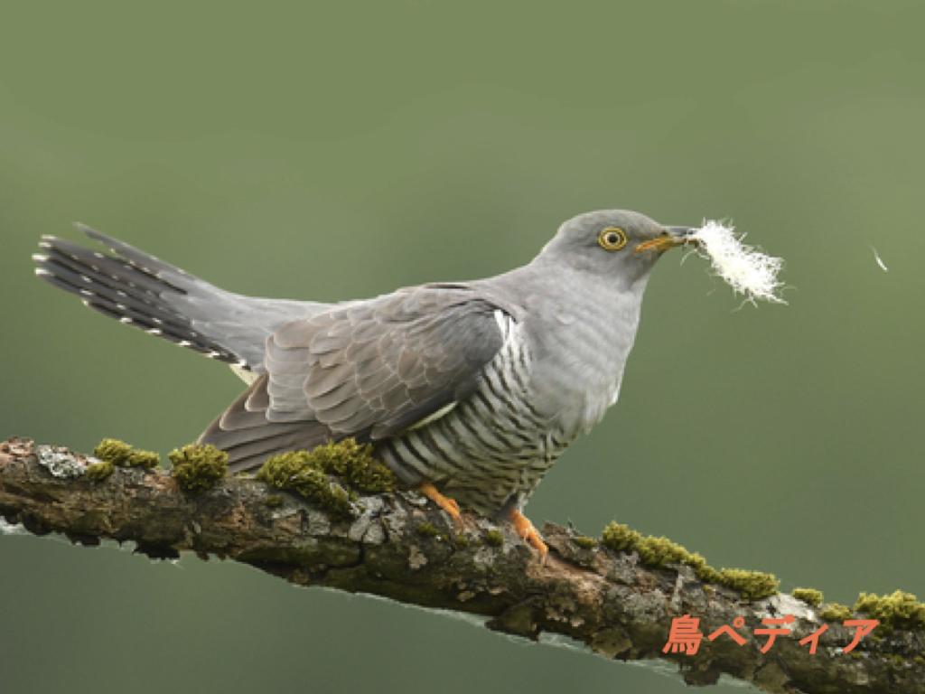 旭山野鳥観察会の記録をまとめました ...