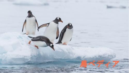 ペンギン 鳥